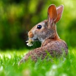 The Rabbit Spirit Animal - Totem Meaning