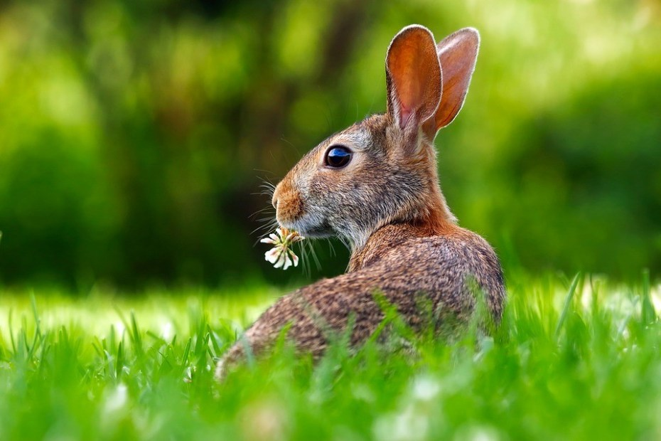 The Rabbit Spirit Animal - Totem Meaning