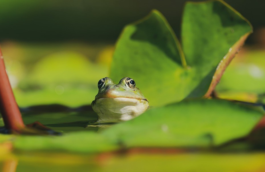 What Does It Mean When You Dream About Frogs?