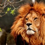 Prophetic dreams about lions