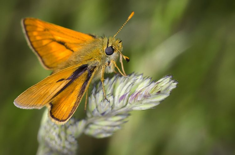 What Do Moths Symbolize In The Bible?