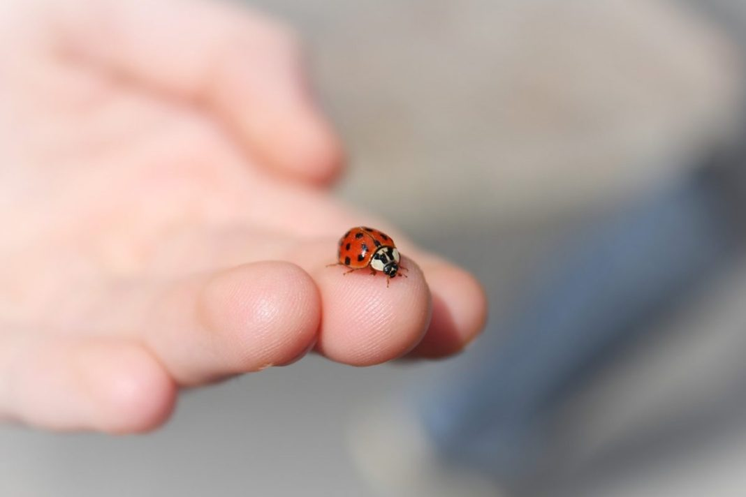 What does it mean when a ladybug lands on you
