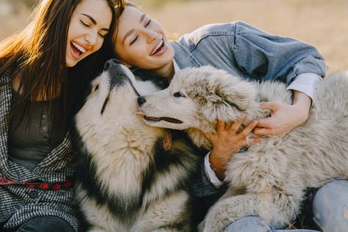 Tips to build a good bond with your dog