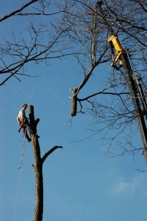 dangers of DIY pruning