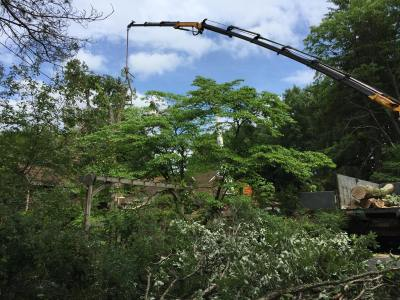 crane tree services and pest control