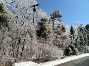 protecting trees from frost