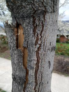 tree problems associated with winter drought