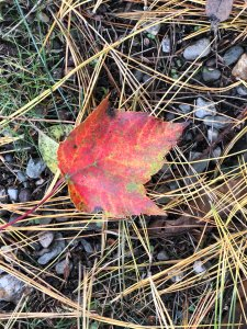 why do tree leaves change color