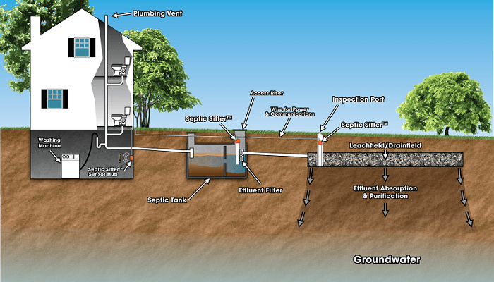 Planting Trees With Shallow Roots Over Septic Systems
