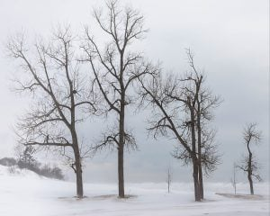 dormant trees in winter winter trees