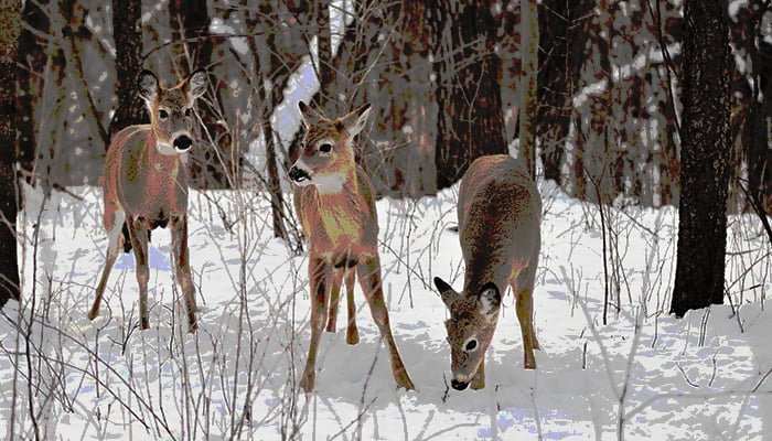Protecting Shrubs & Trees From Winter Deer Damage