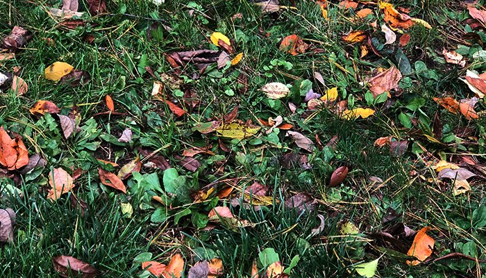 Why Tree Leaves Change Color & Shed