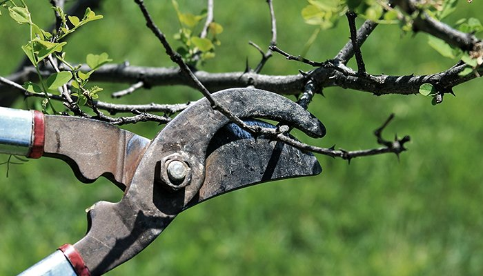 Why You Should Be Pruning Young Trees