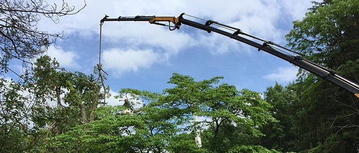 Hiring an Arborist: 3 Phases of Professional Tree Care