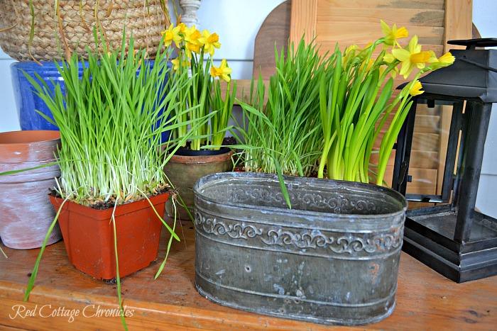 Easy DIY Daffodil Spring Planter