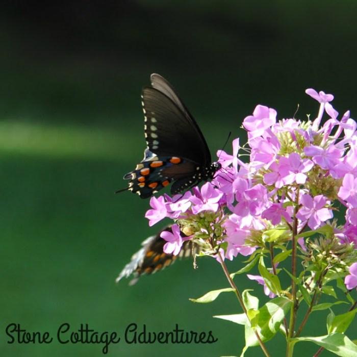 Butterflies and flowers weekend reading