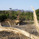 Forest destroyer Oji Paper to carry out REDD feasibility study in Laos. PHOTO: Keith Barney