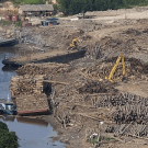Oops. Asia Pulp and Paper underestimates its carbon footprint. By a factor of 550-700. PHOTO: Greenpeace