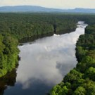 Increasing deforestation in Guyana gives Norway a headache