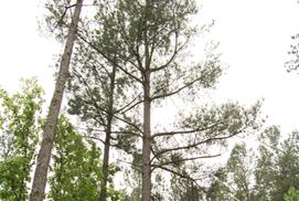 Oklahoma Forestry
