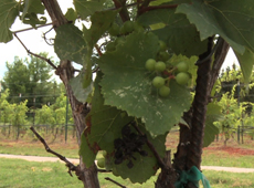 Oklahoma Wine Trail