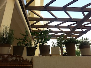 herbs in the city garden dubai