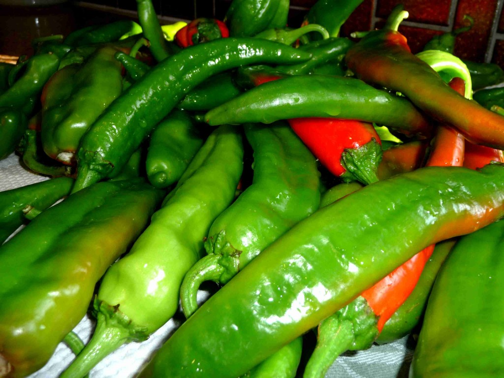 Roasting Chile Peppers Belt