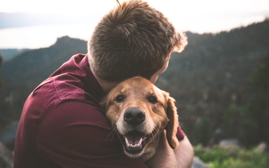 CBD Benefits for Pets