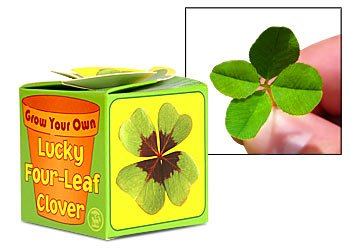 Grow Your Own Lucky Four Leaf Clover – ain't technology grand!