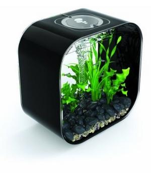 biorbaquarium 1 biOrb Life Aquarium   stylish desktop aquarium