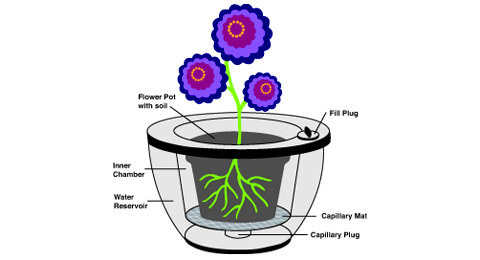 120 Day Self Watering Planter is great for the forgetful flower lover