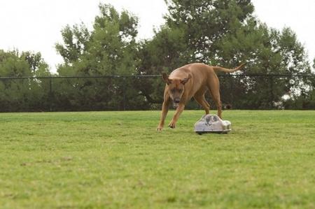 Go-Go Dog Pals – your dog's next best friend