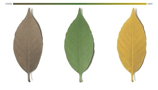Leaf Thermometer paper will make it feel like fall year-round