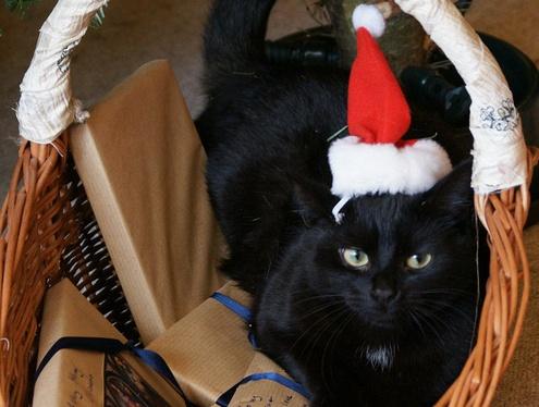 Season's Greets, Happy Holidays and a Very Happy Santa Day