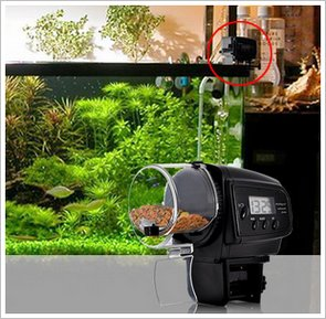 Automatic Fish Feeder – let your vacations be guilt free