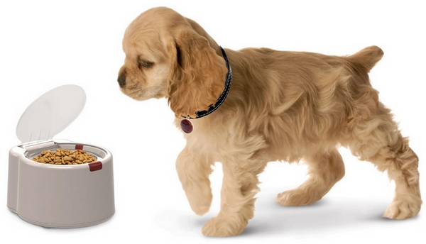 Wonderbowl – microchip activated pet feeder locks the local hobos out