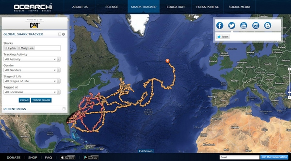 Ocearch – amazing open source great white shark tracking for conservation research…v cool