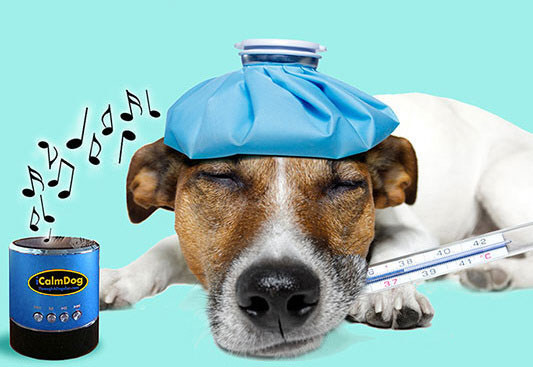 iCalmDog – soothing music for your dog to chill to
