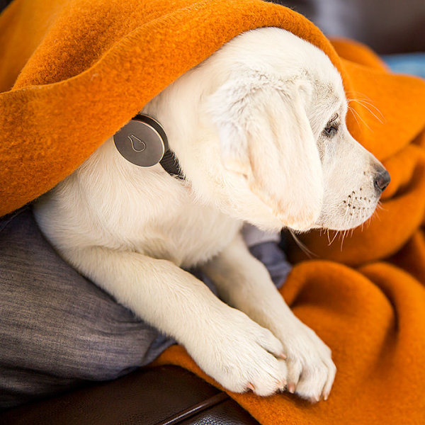 Whistle Wireless Activity Monitor for Dogs – watch your pet with your smartphone