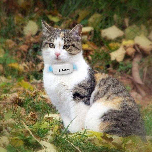 Petforu Pet GPS – always know where your furbaby is