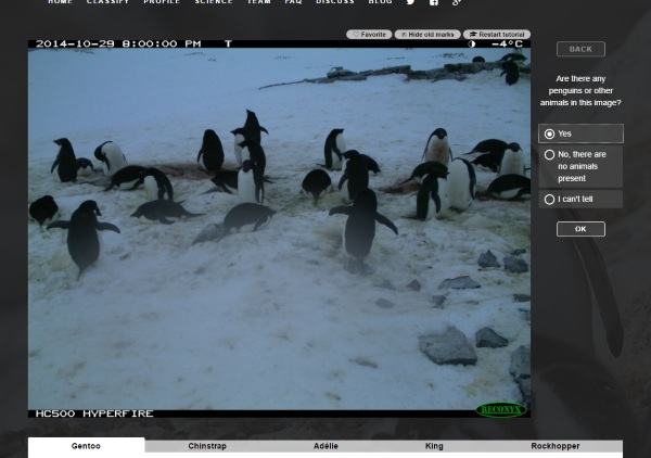 PenguinWatch 2.0 – help science by looking at penguin pictures