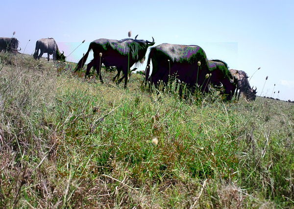 Snapshot Serengeti – help identify wildlife for science