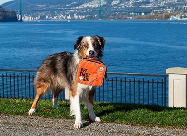 Pet First Aid Kit – know what to do for your next pet emergency