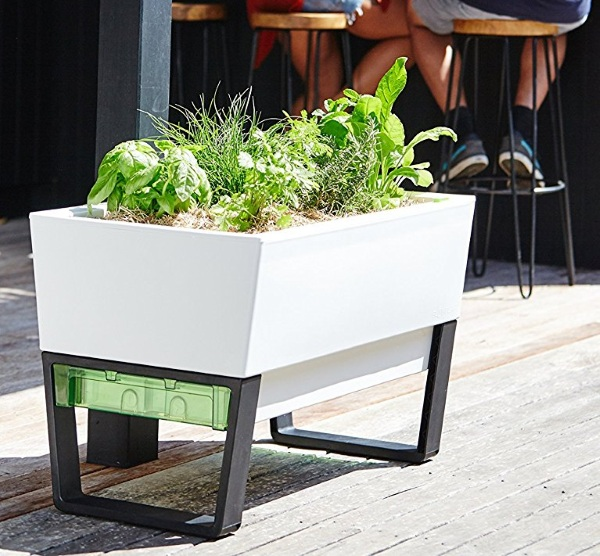 Urban Gardner – make sure you plants stay watered