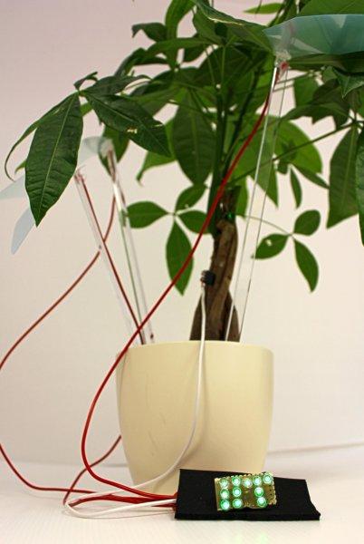 Real Green Energy – plants power LED bulbs