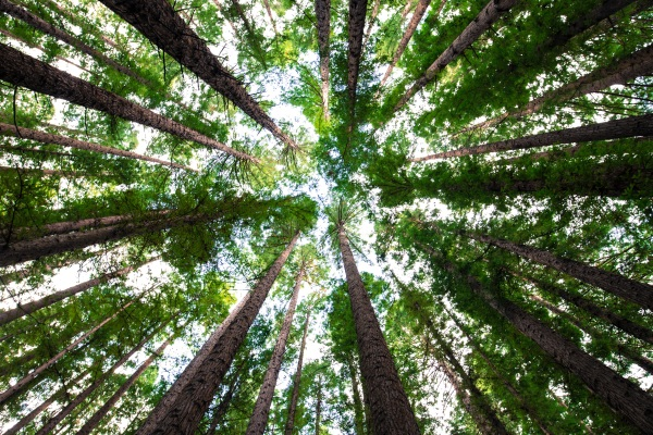 Natural Forests as Carbon Captures – this does not mean more farming