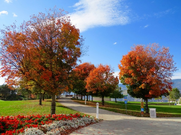 Trees For Better Health – green areas are the best