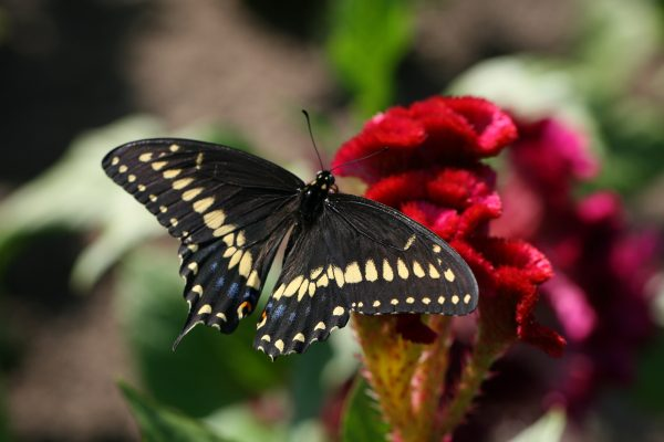 Plant Native Plants – local plants attract nature and makes for beautiful outdoor spaces