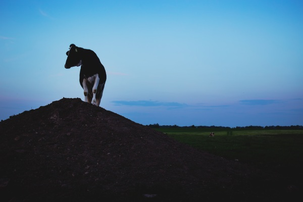 No Red October – cutting red meat for the good of the planet