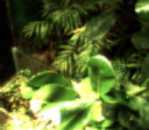 Selfie Taking Plant – plant uses waste energy to snap a photo